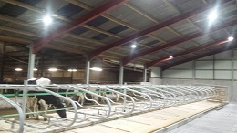 dairy cow led lighting